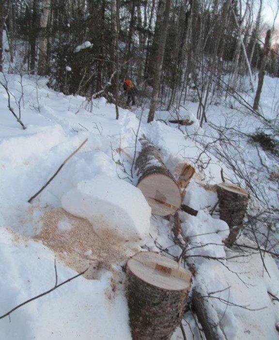 Superviseur pour Transport Jolatem inc. frappé mortellement par un arbre sur un chantier forestier à Béarn